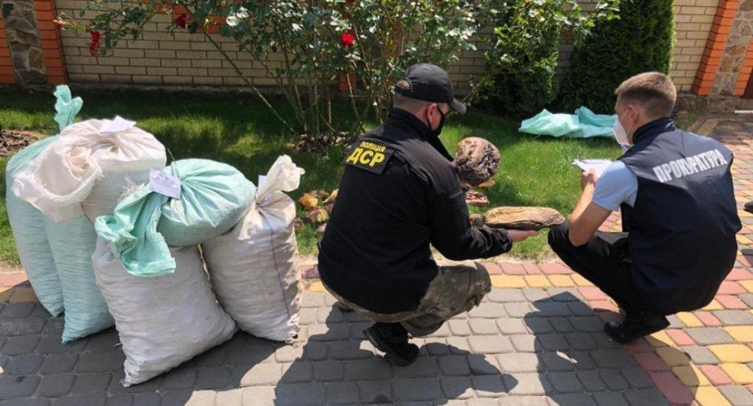 У Рівненській області вилучили бурштину на $1,2 мільйона
