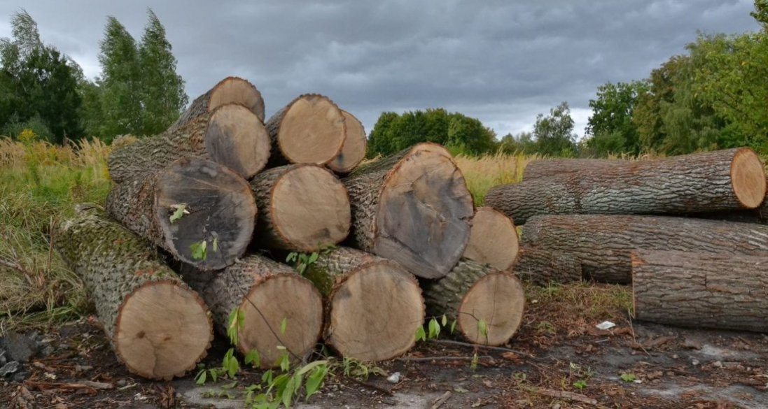 На Волині на екоінспектора відкрили «кримінал» через крадіжку лісу