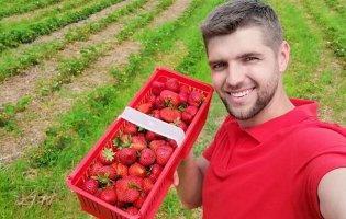 Щоб прогодувати чотирьох синівта доньку, ветеран АТО навчився робити гроші з… полуниці