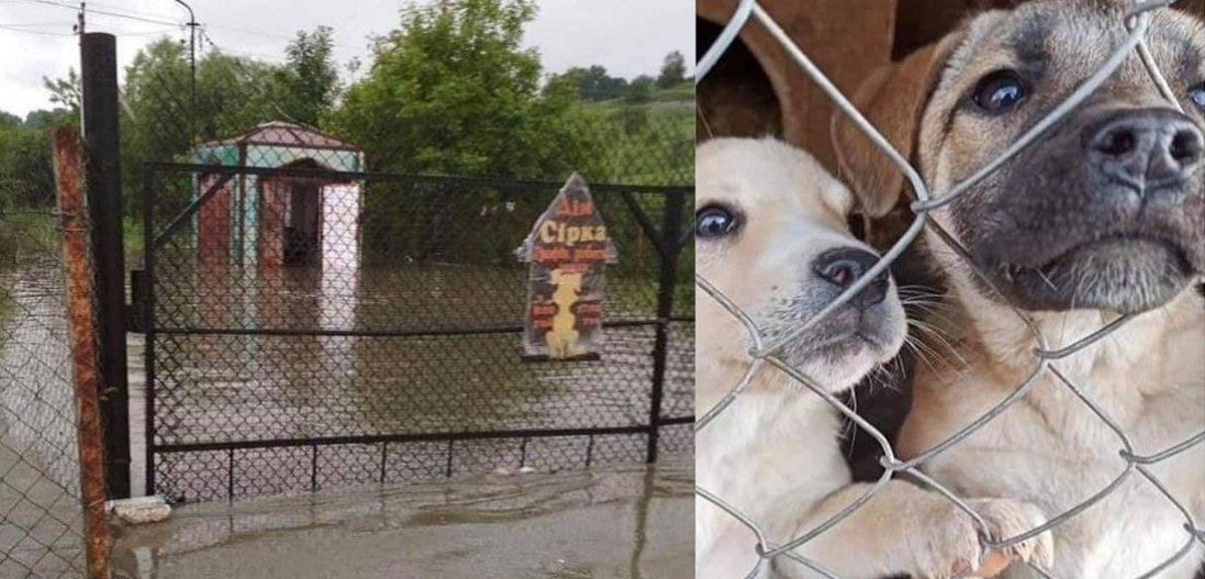 На Прикарпатті затопило собачий притулок: вцілілі шукають порятунку