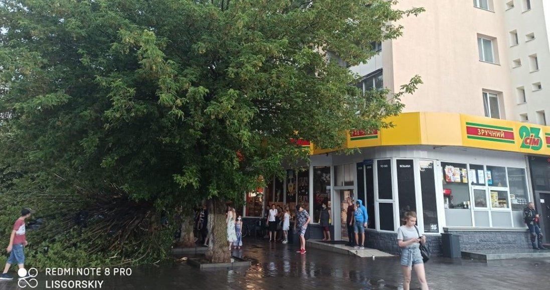 У центрі Луцька на авто впала частина дерева