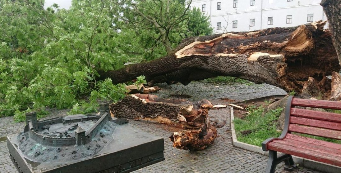 Чому в Луцьку впав Лесин ясен