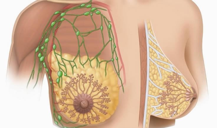 Анатомія жіночих грудей