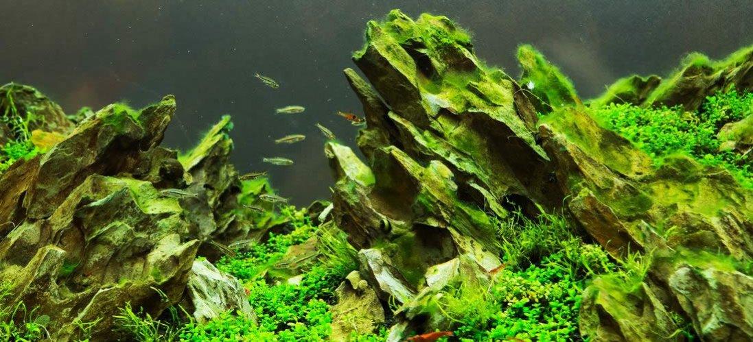 Акваріум для початківців: як вибрати акваріум для будинку