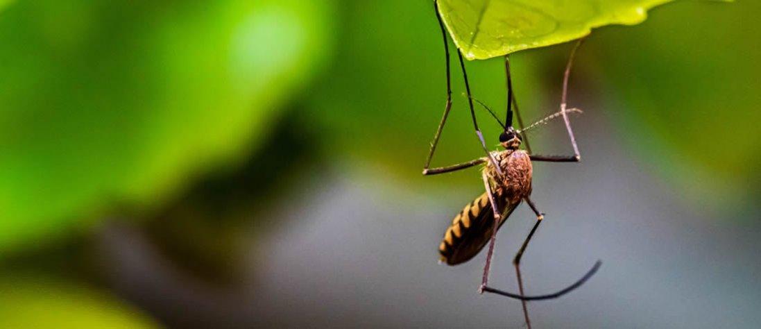 Як захиститись від комарів літом?