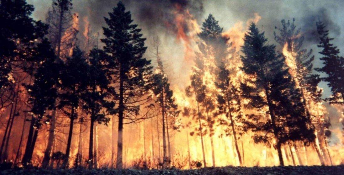 На Луганщині — масштабна лісова пожежа