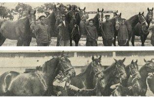Виставки коней в Луцьку 90 років тому