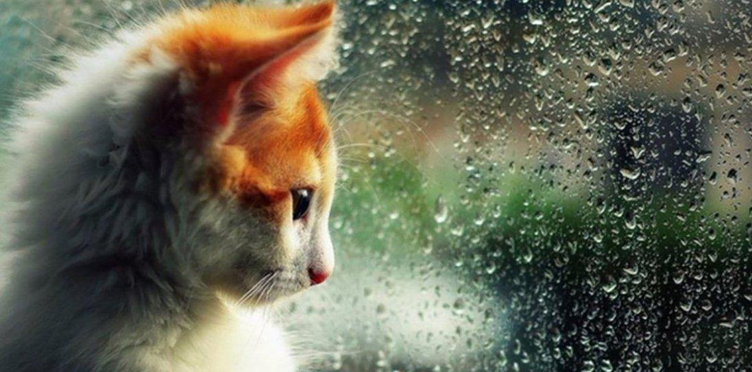 1 серпня: чому сьогодні варто гуляти під дощем та витрачати гроші