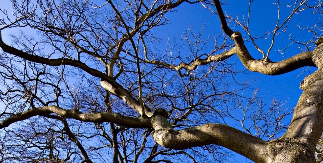 На Володимирщині  дерево вбило чоловіка