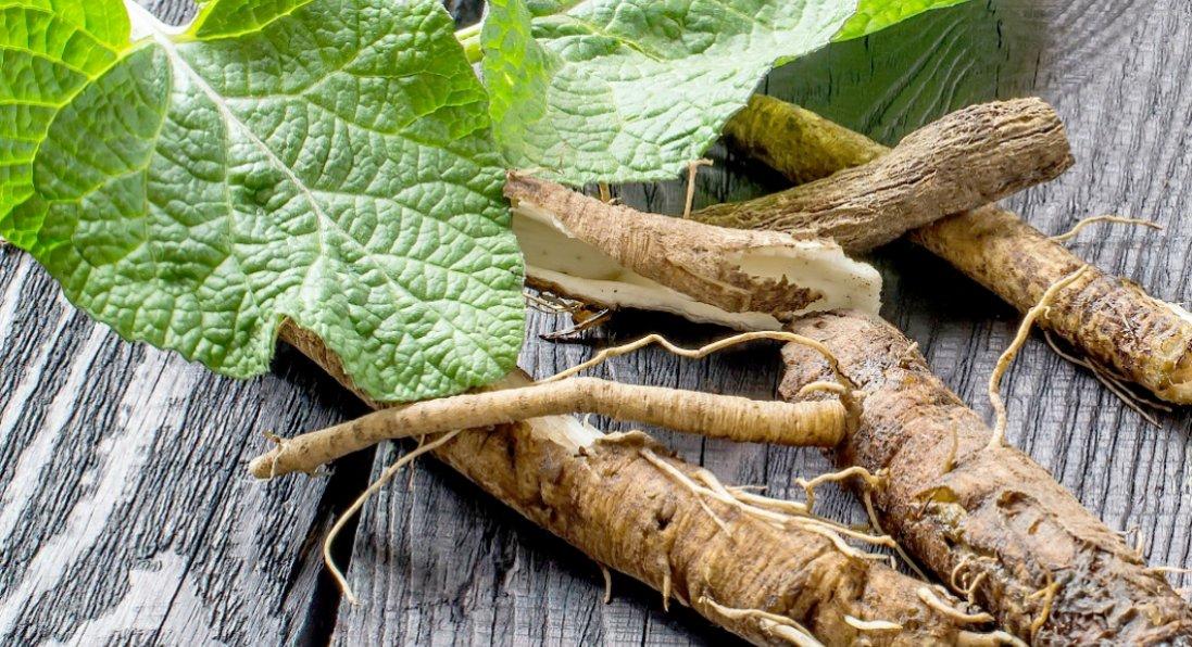 Лопух: як заготовити коріння, яке допомагає при цукровому діабеті та хворобах печінки