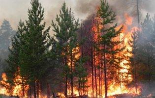 Поліція не виключає підпалу лісів на Луганщині