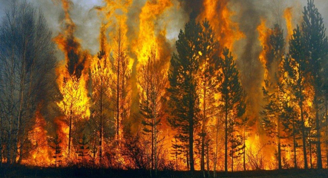 Пожежі на Луганщині: зросла кількість жертв