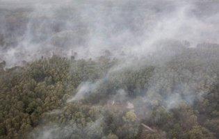 Пожежі на Луганщині: вогонь вразив 11 тисяч гектарів землі