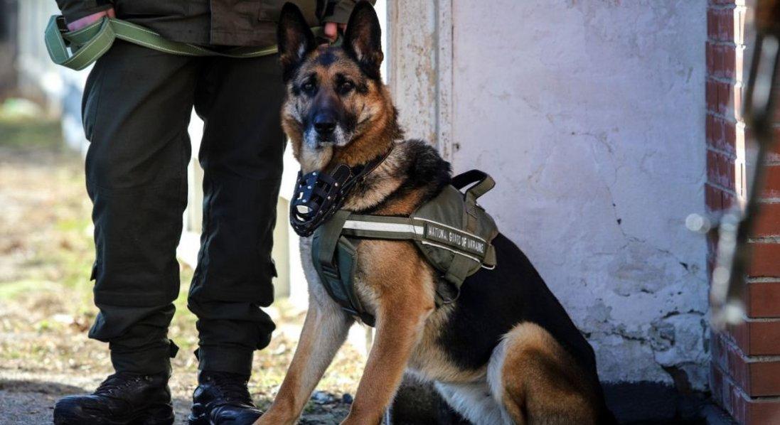 В Україні хворих на COVID-19 хочуть виявляти за допомогою собак-нюхачів