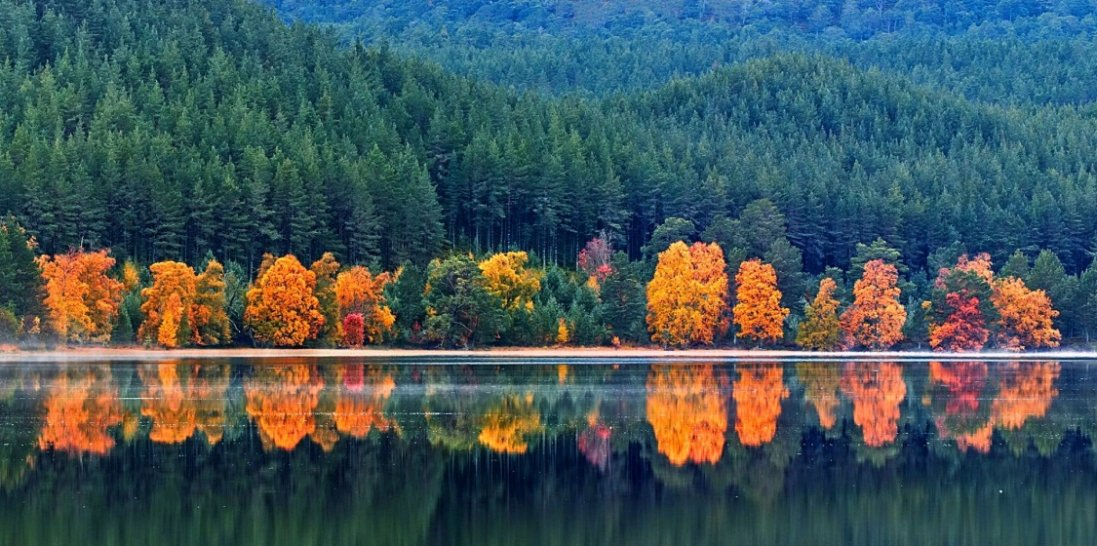 17 жовтня: чому сьогодні не  варто  ходити до лісу та святкувати весілля