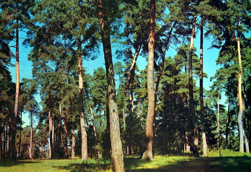 Ліс на Житомирщині