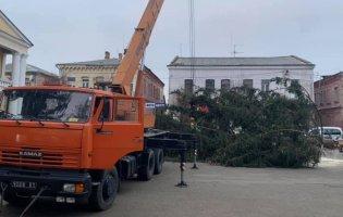 На Рівненщині встановили ялинку, яку зрубали на кладовищі