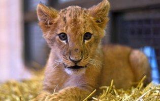 У Луцькому зоопарку замешкала 5-місячна левичка
