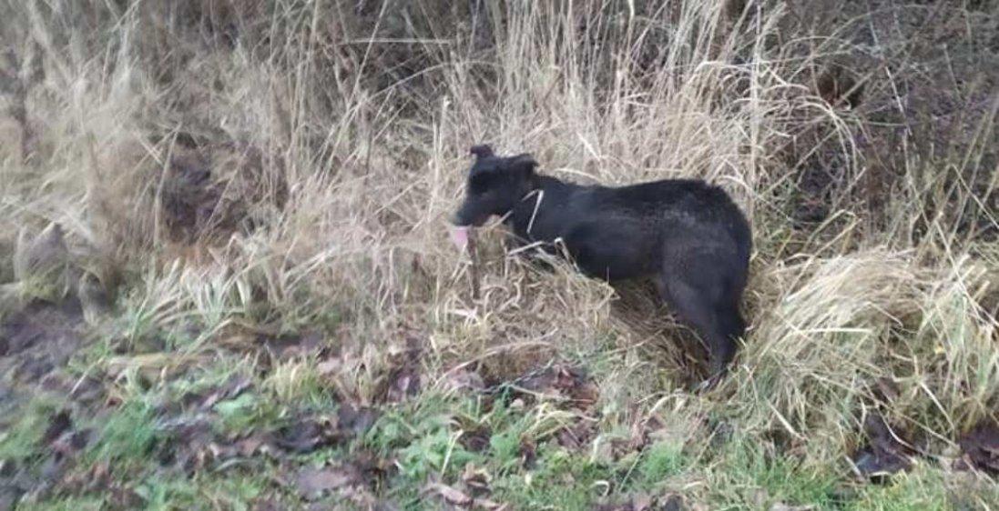На Львівщині живодер прив'язав собаку до авто та волочив дорогою