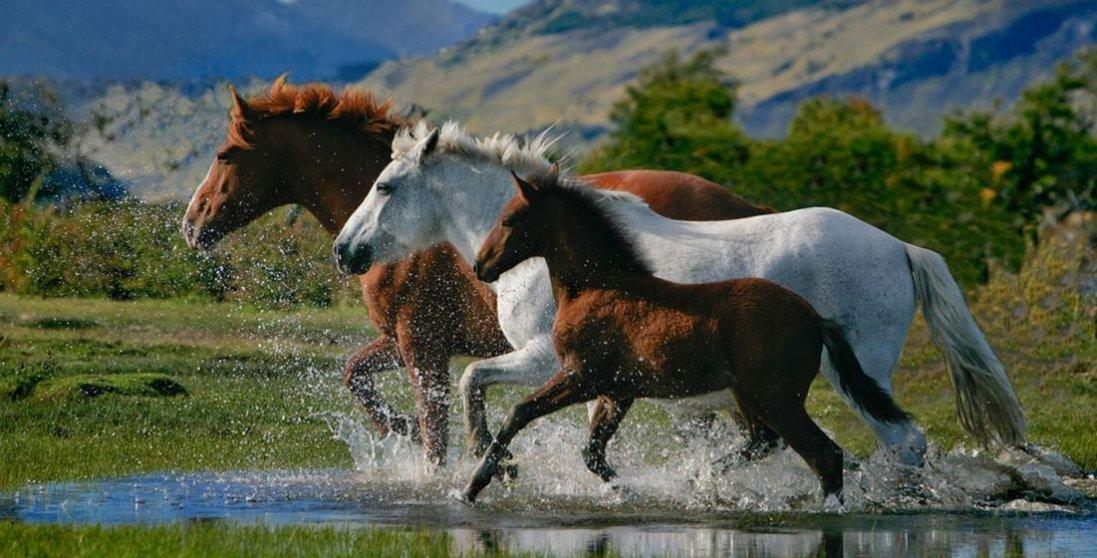 Сниться кінь: що означає такий сон