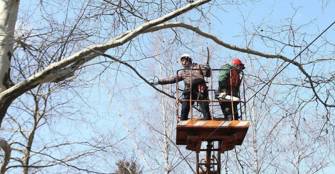 У Луцьку хочуть змінити правила кронування дерев