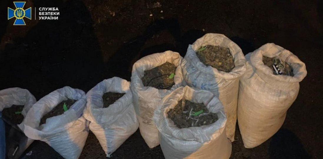 На Волині затримали скупників бурштину з 180 кг товару