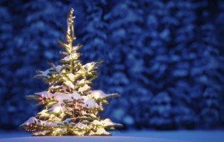 Чому не можна викидати ялинку після свят: 7 причин