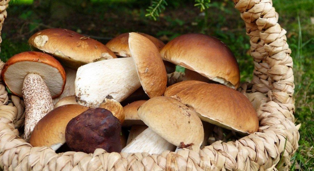 Які гриби найбільш корисні та чим небезпечні ті, що куплені на стихійному ринку