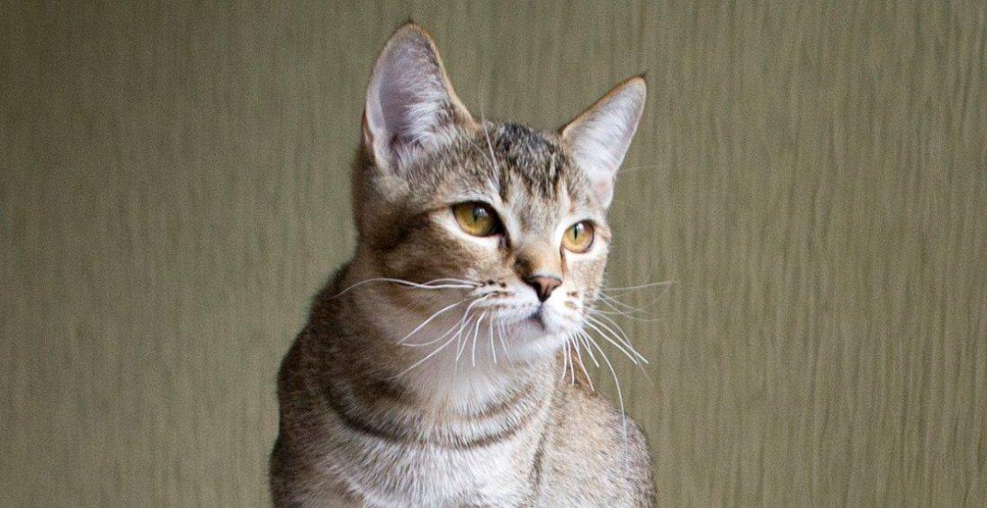 Як коти показують «погані» місця у вас вдома