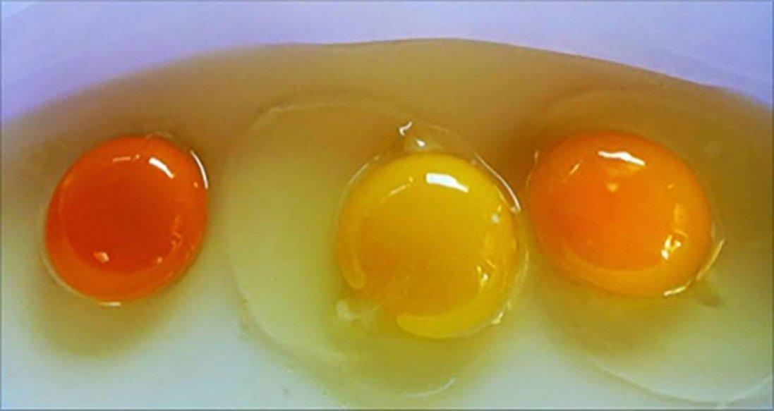 Яєчні жовтки: чим корисні і кому їх не можна їсти
