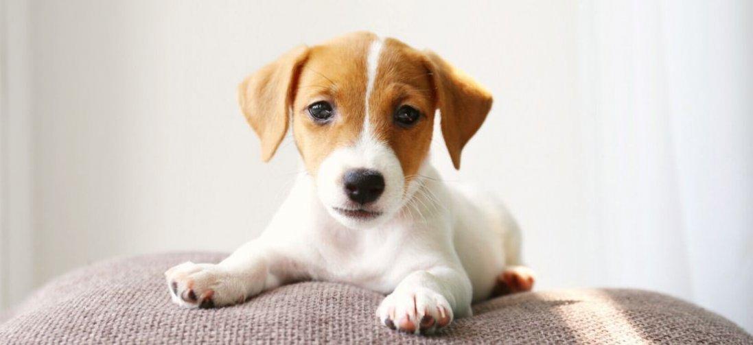 Що станеться, якщо сниться собака