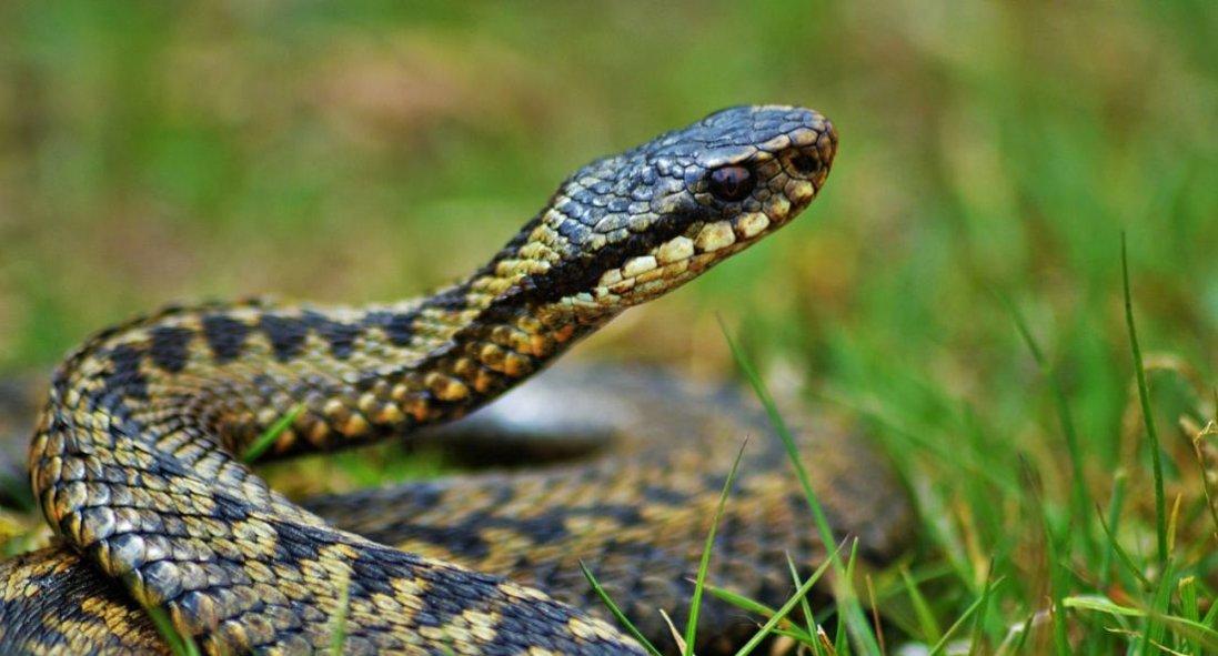 У Харкові таксист знайшов змію в авто