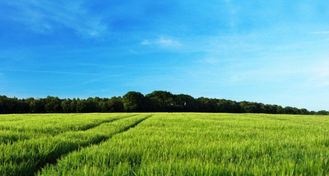Волинські фермери можуть залишитися без землі. Чому?