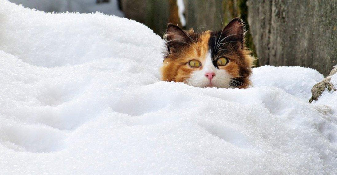 В Україну повертається сніг та холод