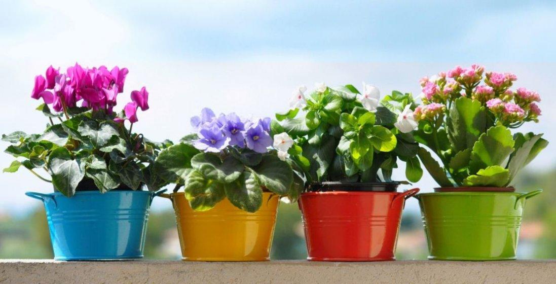 Які квіти приманюють жіноче щастя