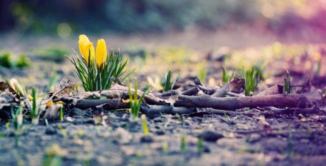 Яким буде в Україні початок весни: прогноз погоди шокує