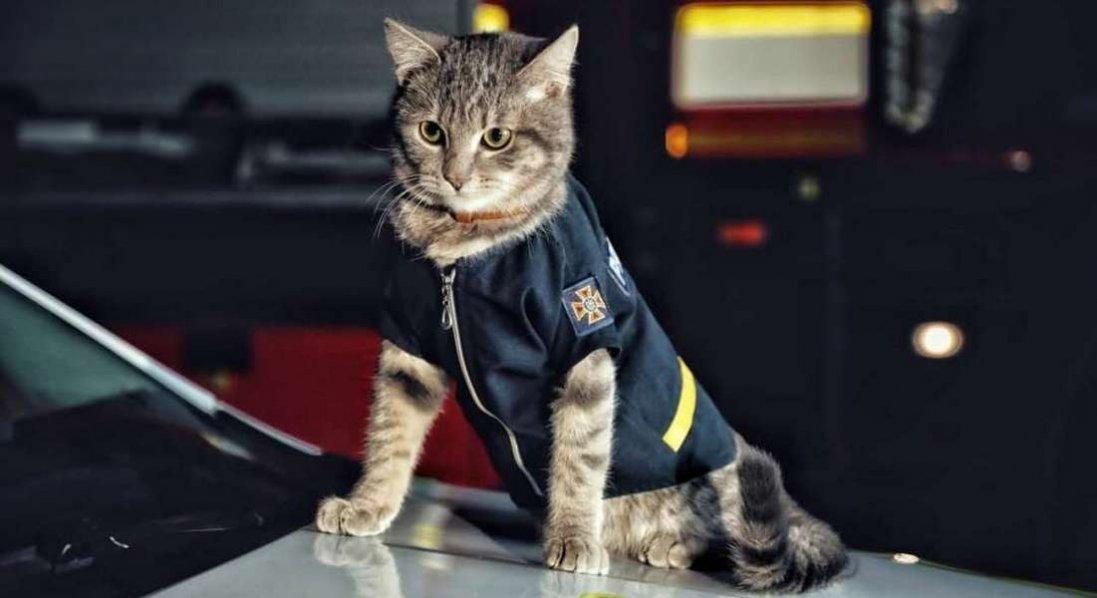 У Києві кіт отримав звання майора
