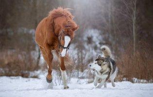 У Польщі для собак і коней хочуть запровадити пенсію