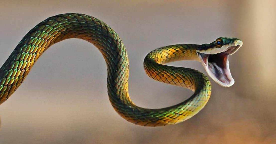 Якщо сниться змія – готуйтеся до біди: що може статися