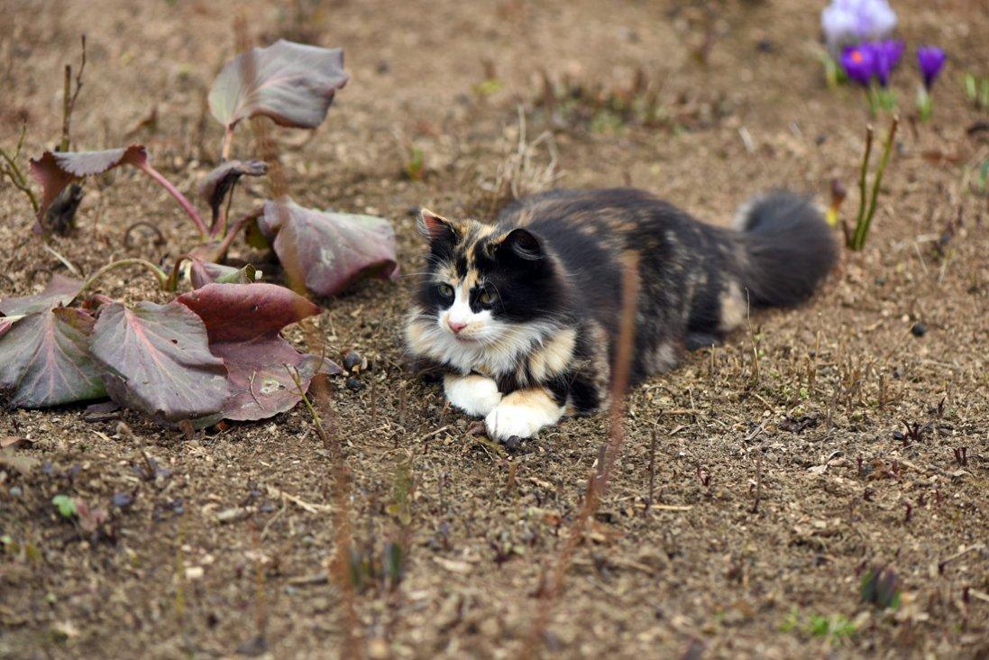 Весна в Луцькому зоопарку: фото