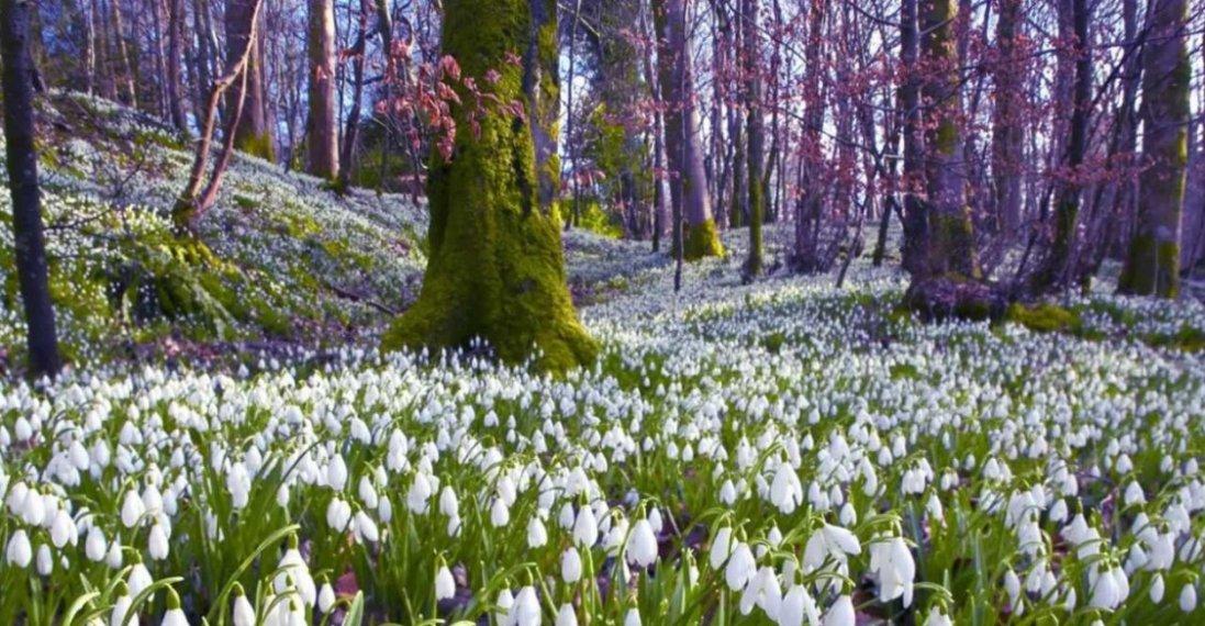Кожні 4-5 днів зміна погоди:  квітень і травень в Україні будуть нестійкими, – синоптикиня
