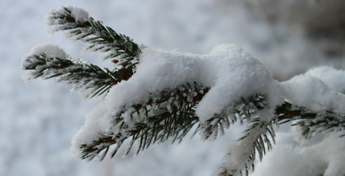 Сниться сніг: значить, у вас все добре!
