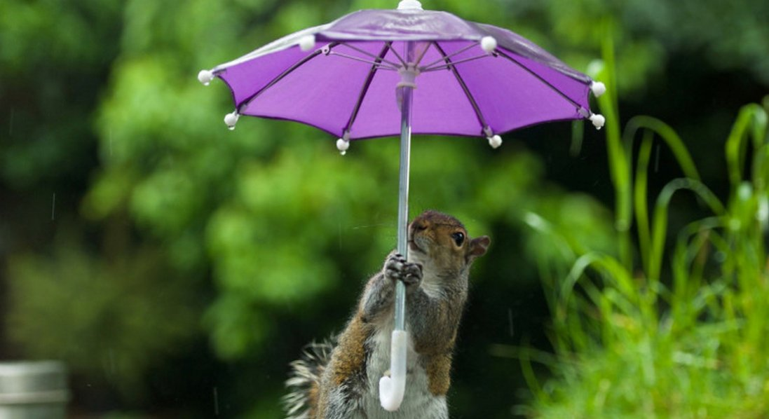 Дощі та грози: прогноз погоди до кінця тижня