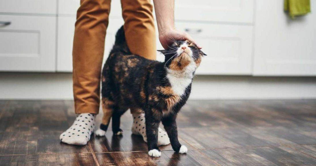 Три звичні для нас продукти, які смертельні для котів і собак