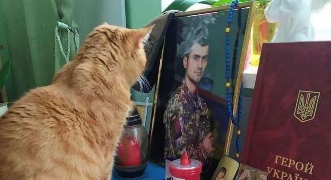 Увесь рік після загибелі господаря кіт сумує біля його портрета