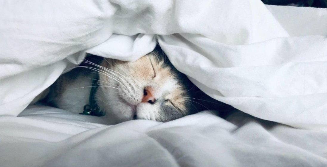 Що означають самі поширені сни