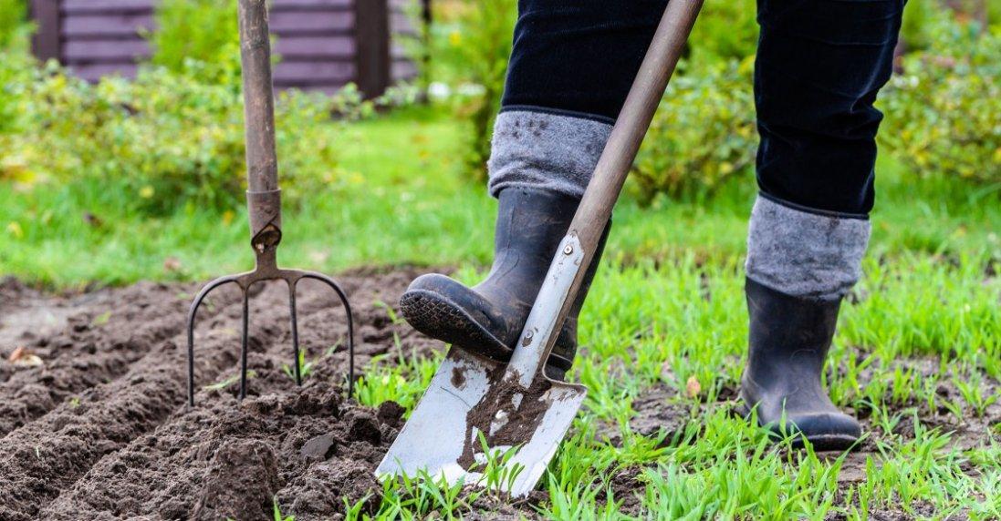 Як виростити на дачі гарний урожай: щоденний календар
