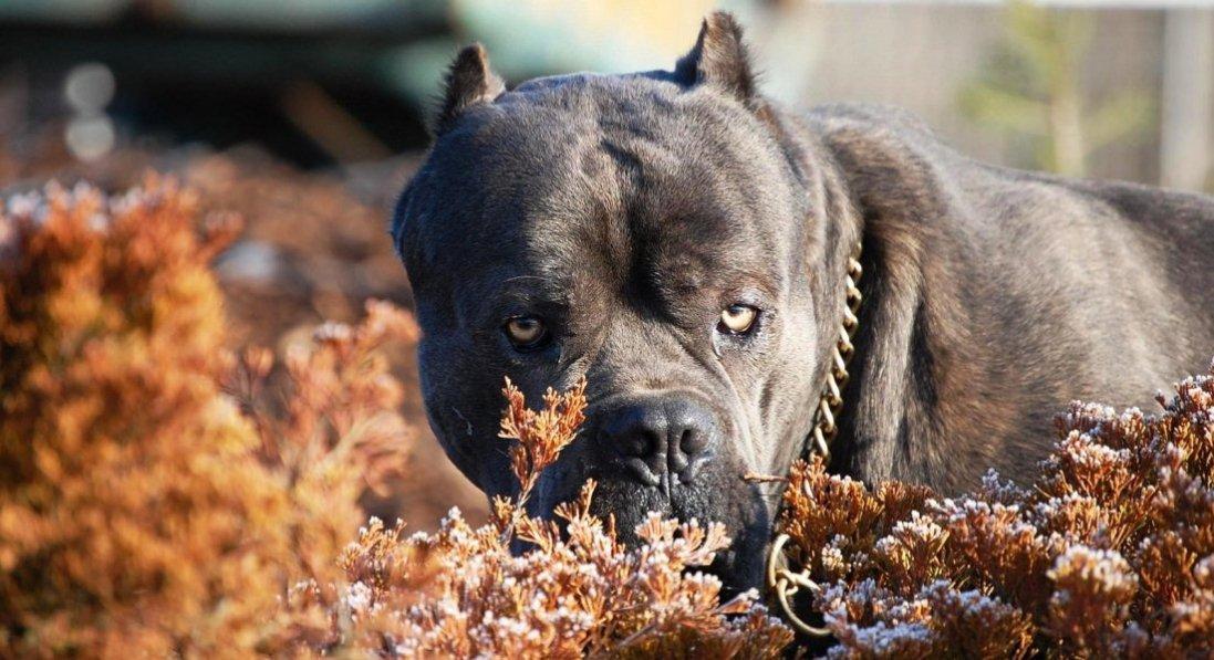 У Донецькій області пси до смерті загризли чоловіка