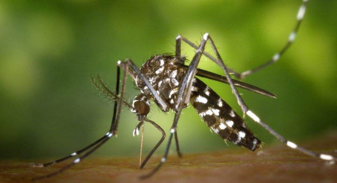 В Україні - п'ять випадків малярії: один - летальний