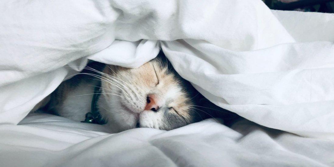 В якій позі найкорисніше спати